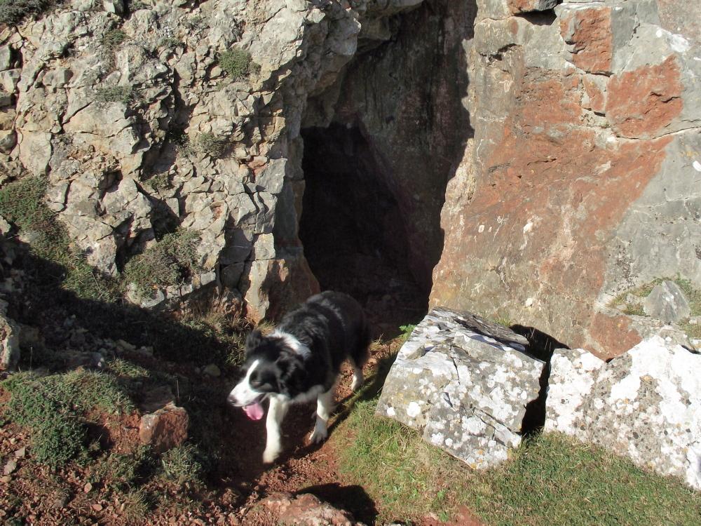 Dog Walks South Cave