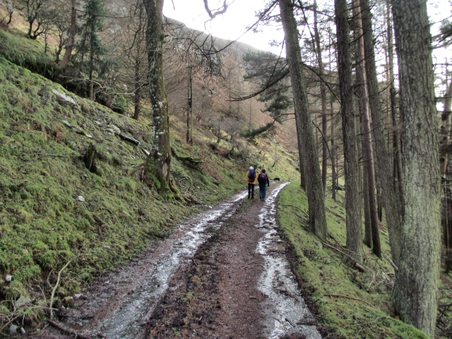Starting near Penygarreg dam on a forest trail