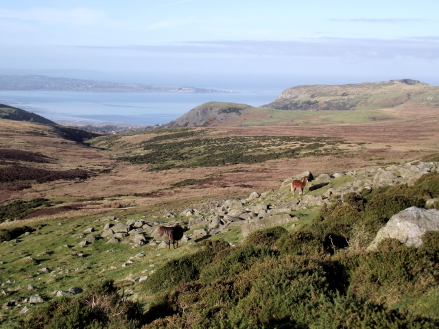 Wild horses, often seen in the hills of the Northern Carneddau