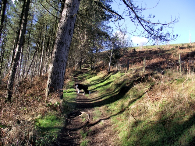 The Offa's Dyke Path, heading north for Penycloddiau