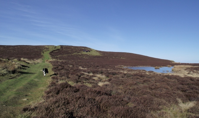Pond just below the summit of Penycloddiau