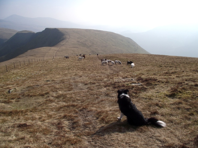 Wild ponies on the descent to Bwlch Gwyn