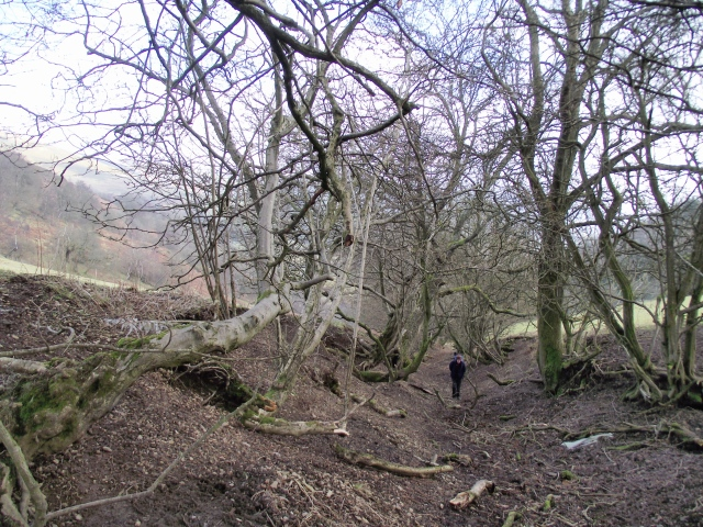 Still on the drove road – can't see the wood for the trees!