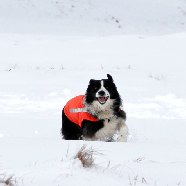 What the body sees – incoming search dog!