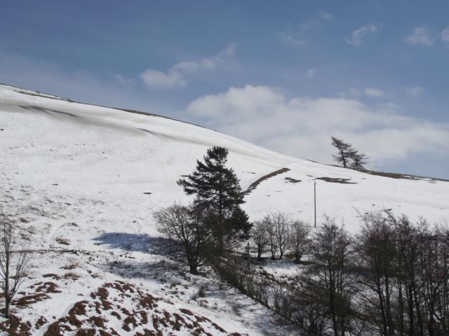 Wind blown tree on the ridge