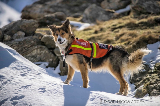Trained search dog 'Cluanie' ready for action