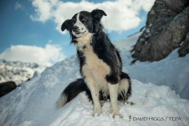Apprentice search dog 'Mist'