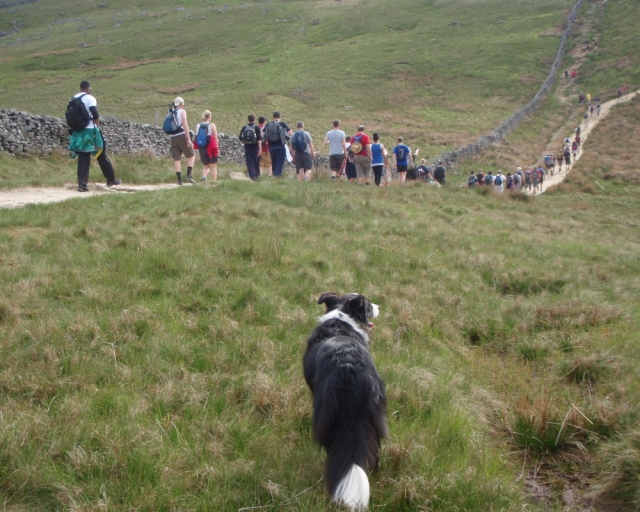 …. with Border Collie 'Mist' along, to make sure the humans didn't stray