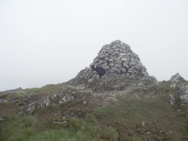 The summit cairn, Border Collie 'Mist' first to the top as usual