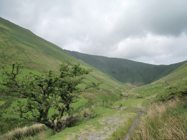 The route out to Drysgol and Aran Fawddwy