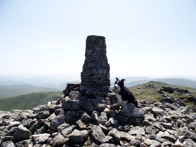 Border Collie 'Mist' at the summit of Aran Fawddwy (compare with the photo in post #135)