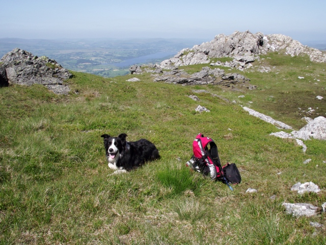Companions for the trip – Border Collie 'Mist' and the lightest pack possible