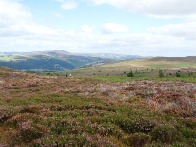 Typical Berwyn scenery