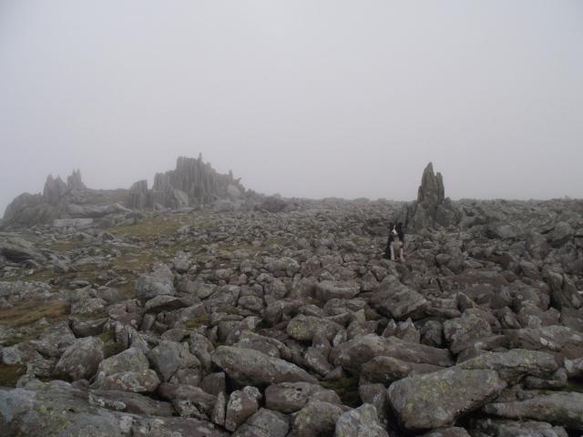 The summit plateau of Glyder Fawr
