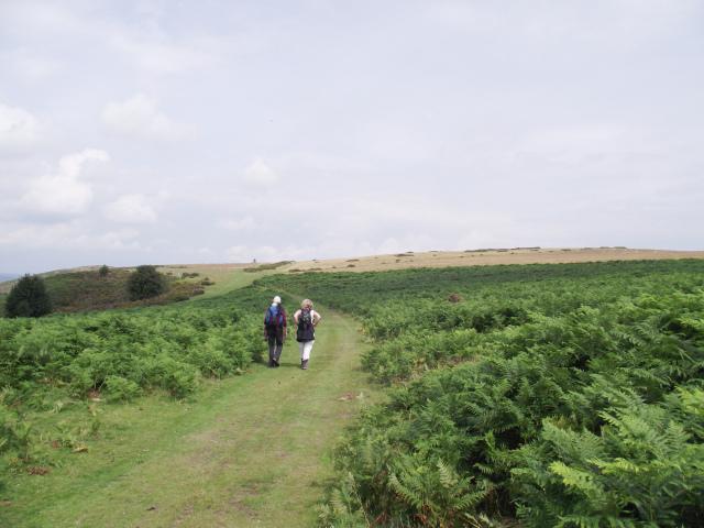 Hergest Ridge, on the Welsh-English border