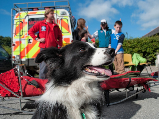 …. but trainee search dog 'Mist' wants to go for a walk! (BB)