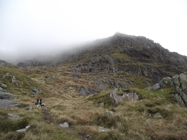 An impatient Border Collie waits to start 'Seniors Ridge'