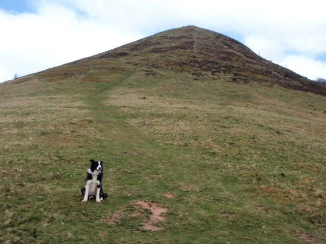 Impatient Border Collie 'Mist' can't wait to get to the top!
