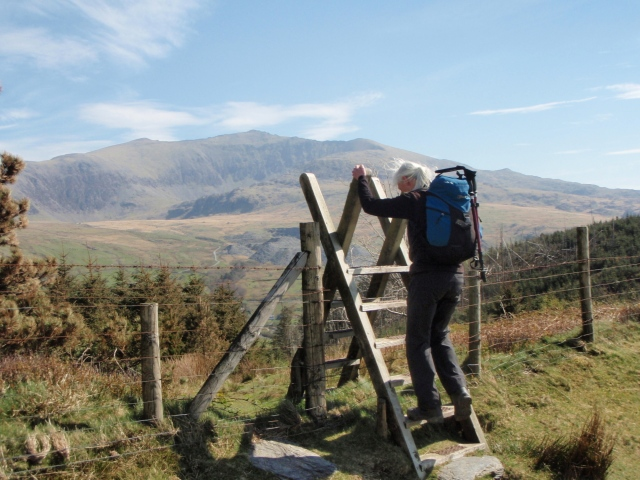 Above the forest now, with Yr Wyddfa (Snowdon) in the background