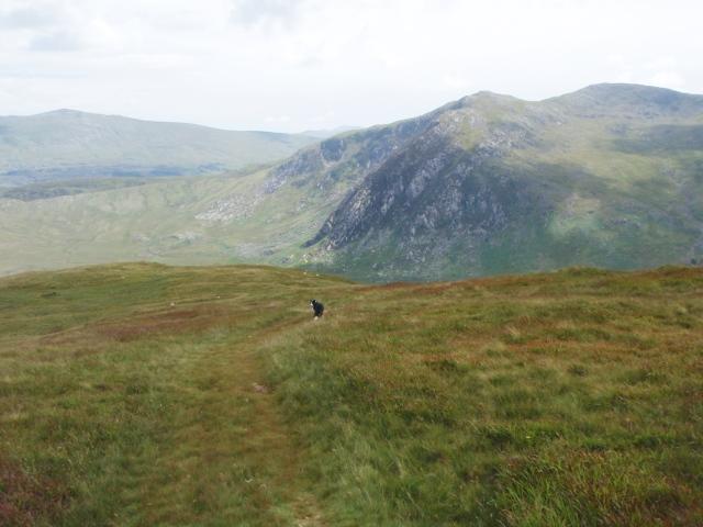 The long grassy ridge of Yr Braich ….