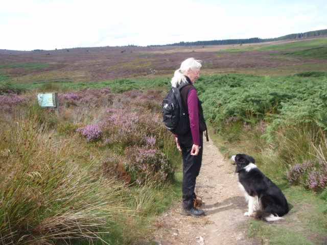 On the Offa's Dyke Path, with Llandegla Forest in the distance