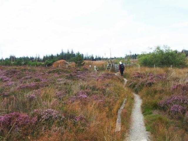 On the edge of Llandegla Forest