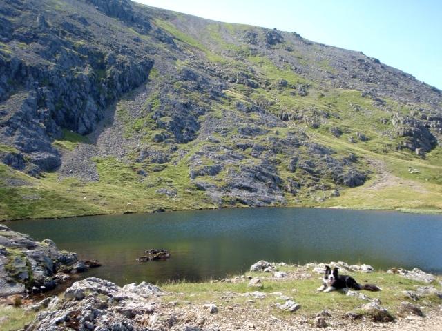 Border Collie 'Mist' at Llyn y Cwn