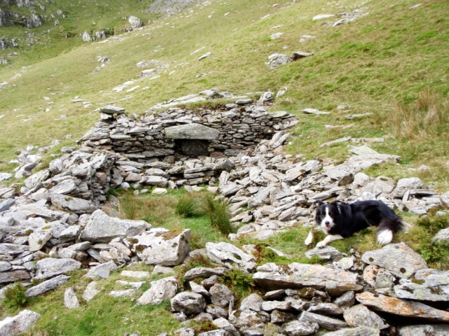 Border Collie 'Mist' at the ruins of the old hafod