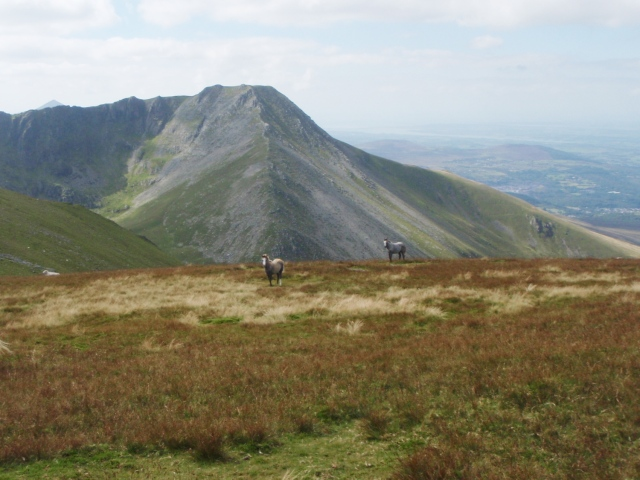…. and more Carneddau ponies