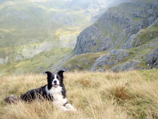 Border Collie 'Mist' above the Afon Llafar