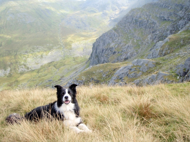 Border Collie 'Mist' above the Afon Llafar
