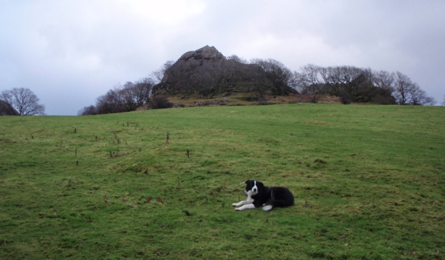 Border Collie 'Mist' behind 'The Pinnacles' at Capel Curig