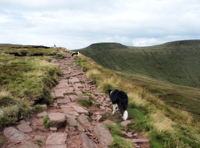 """""""Looks like another dog to me"""" – 'Mist' spots another Border Collie ahead"""