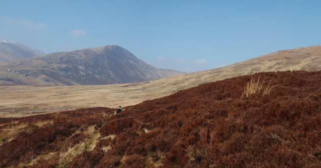 Pen Llithrig y Wrach ahead, but not on today's route