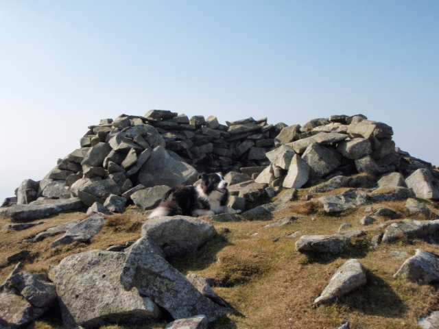 The summit of Gyrn – small, but enough room for a border Collie