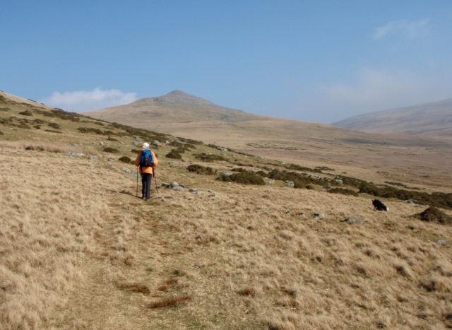 On the south slopes of Llefn, heading towards Gyrn