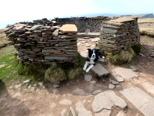 Summit shelter – couldn't get in, it was full of dogs!