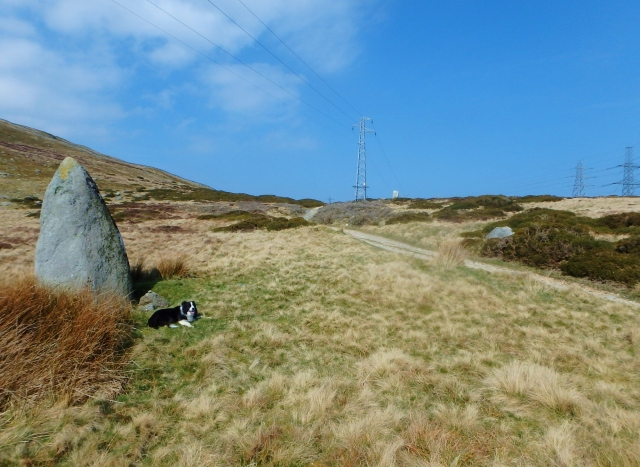 Standing stone next to the Roman Road at Bwlch y Ddeufaen
