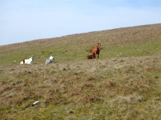 Local residents - wild ponies