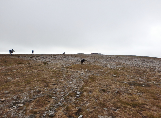 The summit plateau of Ingleborough
