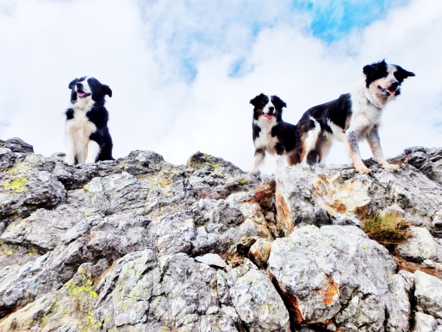 …. but the dogs are willing to slow down and pose (L to R 'Mist', 'A.J.' and 'Caizers')