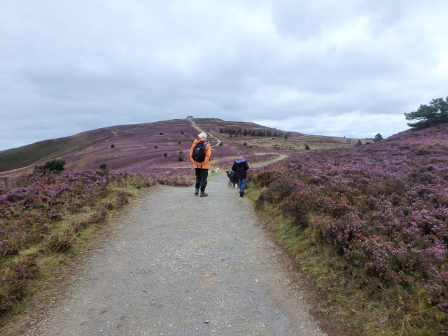 The track up Moel Famau – a long way for little legs!