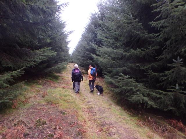 .... before heading up through Warren Wood