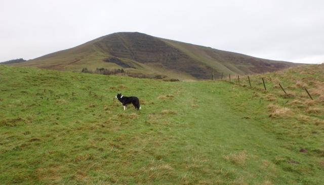 Border Collie 'Mist' heading for Mam Tor