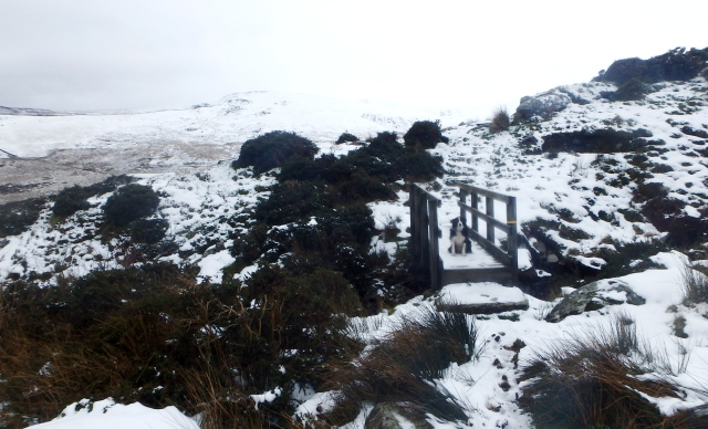 A bit more snowy at 450 metres