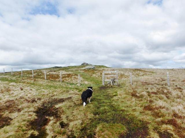 The summit of Cadair Bronwen ahead ….