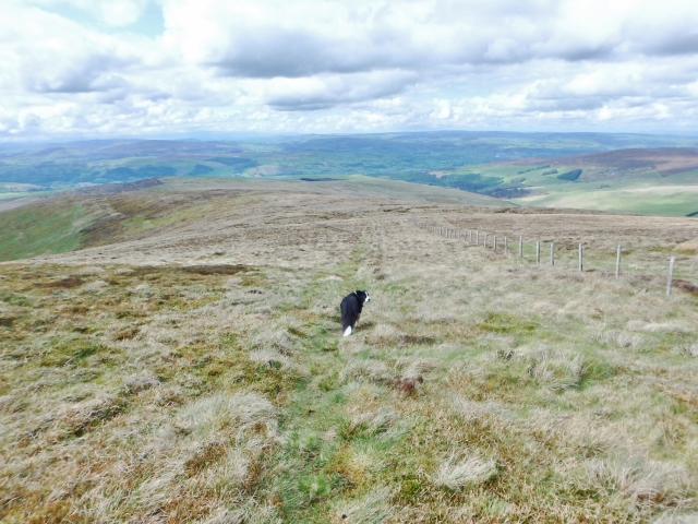 On the descent towards Moel Pearce