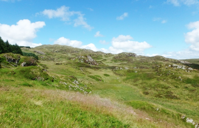 Emerging from the forest – the ridge leading to the summit of Dduallt