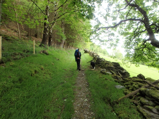 A wander through the woods ….
