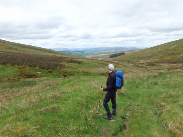 Looking back down Clochnant towards the wood ….